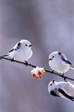 Winter birds, white feathers, twigs, snow, berries