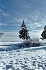 Winter, snow, trees, sun rays