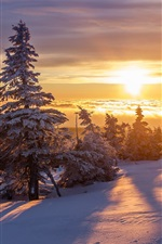 Preview iPhone wallpaper Winter, thick snow, forest, trees, sunrise, morning