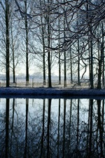 Winter, trees, river, sunrise, snow, water reflection