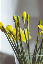 Preview iPhone wallpaper Yellow narcissus flowers, vase