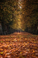Preview iPhone wallpaper Autumn park, trees, path, leaves, people