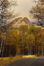 Preview iPhone wallpaper Autumn, road, birch forest, mountains