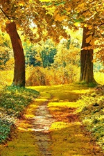 Autumn trees, path, grass, yellow leaves
