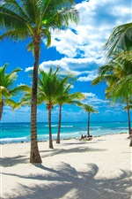 미리보기 iPhone 배경 화면 해변, 바다, 야자수, 열대, 구름, 햇빛