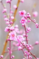 미리보기 iPhone 배경 화면 아름 다운 핑크 복숭아 꽃, 나뭇 가지, 봄