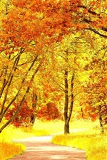 Preview iPhone wallpaper Birch forest in autumn, yellow leaves