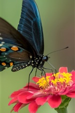 Preview iPhone wallpaper Black wings butterfly and red flower