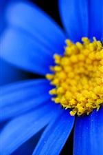 Preview iPhone wallpaper Blue petals daisy, yellow pistil