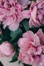 Preview iPhone wallpaper Bouquet peonies, pink flowers, bench