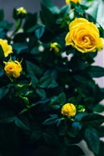Preview iPhone wallpaper Bouquet, yellow roses