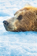 Preview iPhone wallpaper Brown bear in the cold water, snow, foam