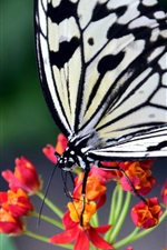 Butterfly, red flowers