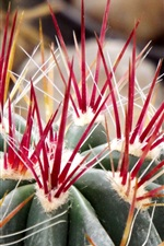 Preview iPhone wallpaper Cactus macro photography, thorns