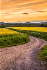 Preview iPhone wallpaper Canola flowers field, road, grass, sunset