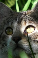 Preview iPhone wallpaper Cat hidden in the grass, face, eyes