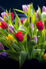 Colorful tulips, red, pink, purple, yellow flowers