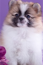 Cute dog and purple flowers