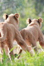 Preview iPhone wallpaper Cute lion cubs running and chase
