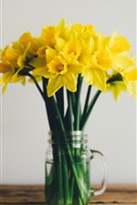 Daffodils, yellow flowers, vase