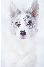 Preview iPhone wallpaper Dog in winter, snow, face, front view