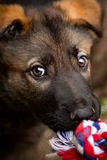 Cão, jogo, corda
