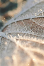 Preview iPhone wallpaper Dry leaf, frost