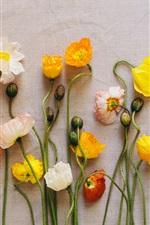 iPhone fondos de pantalla Ejemplares de flores, amapolas