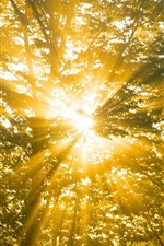 Preview iPhone wallpaper Forest, trees, nature, sun rays