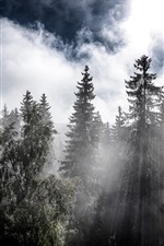 Preview iPhone wallpaper Forest, trees, sun rays, clouds