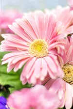 Preview iPhone wallpaper Garden flowers, pink daisy, petals, spring