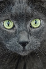 Preview iPhone wallpaper Gray cat, yellow eyes, face, front view