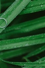 Preview iPhone wallpaper Green grass, dew, rings