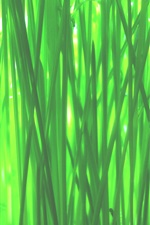 Preview iPhone wallpaper Green grass macro photography, spring