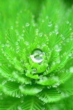 Green plants close-up, like a flower, dew