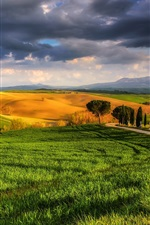 Preview iPhone wallpaper Italy, Tuscany, beautiful nature, fields, meadows, trees, sunny