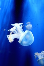 Preview iPhone wallpaper Jellyfish, tentacles, underwater, sea animals