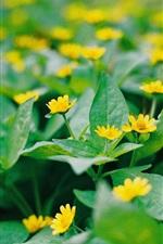 Little yellow flowers, green leaves