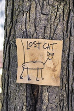 Preview iPhone wallpaper Lost cat, tree, street