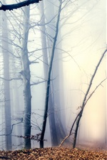 Preview iPhone wallpaper Morning, forest, trees, path, fog, autumn