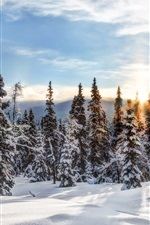 Preview iPhone wallpaper Norway, Trysil, winter, snow, trees, forest, sunset
