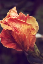 Preview iPhone wallpaper Orange flower close-up, blurry background