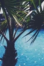 미리보기 iPhone 배경 화면 야자 나무 잎 근접 촬영, 섬광, 물