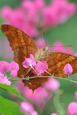 Preview iPhone wallpaper Pink flowers, butterfly, insect, blurry background