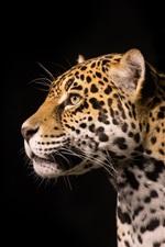 Preview iPhone wallpaper Predator jaguar, black background