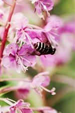 Preview iPhone wallpaper Purple flowers bloom, bee, spring