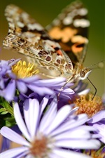 Preview iPhone wallpaper Purple flowers, butterfly, wings, blurry background