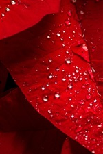 Preview iPhone wallpaper Red leaves, water droplets