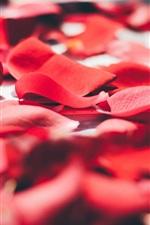 Preview iPhone wallpaper Red rose petals macro photography, romantic