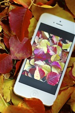 Preview iPhone wallpaper Red yellow leaves, autumn, iPhone